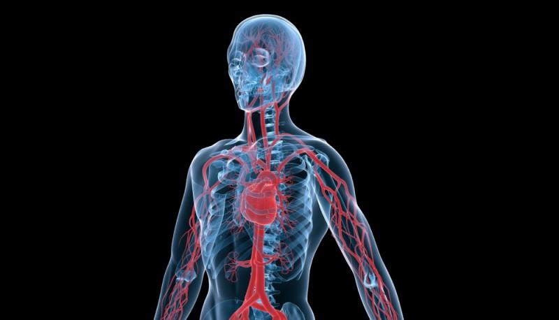 vascular photo